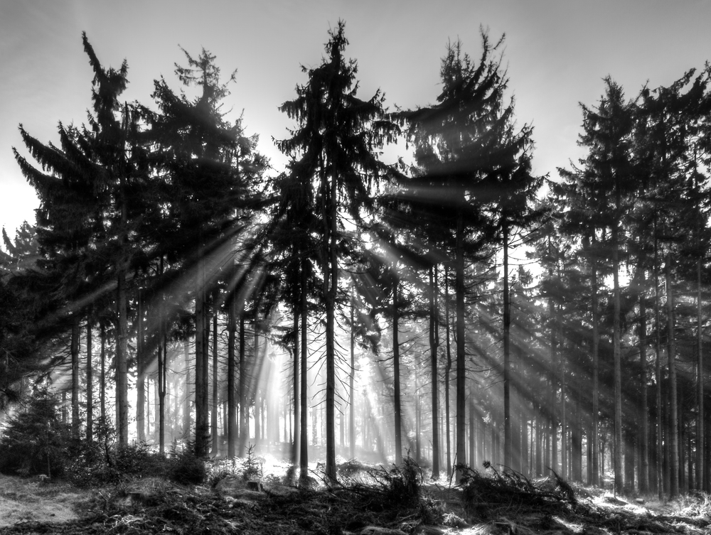 7 Secrets for Black and White Photography