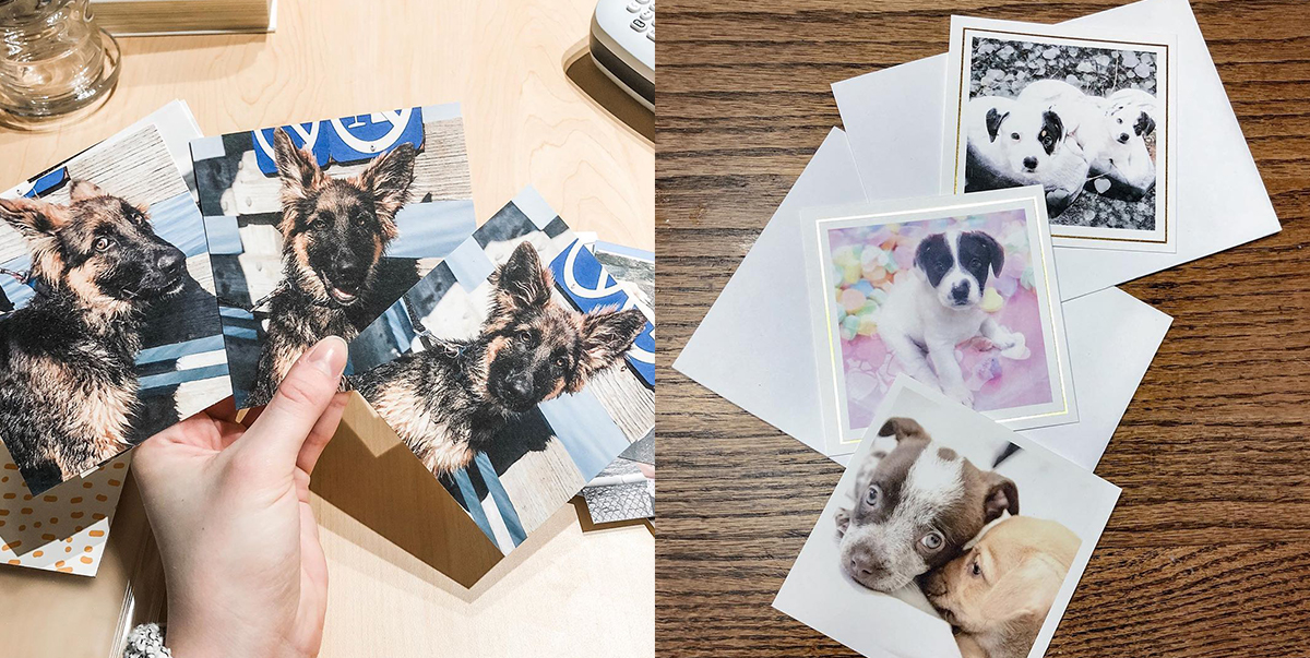 Print Your Purr-fect Pet Photos